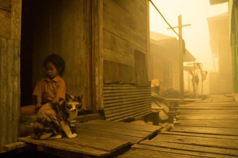 Gigantyczne pożary lasów trawią Indonezję /źródło: Twitter Greenpeace /INTERIA.PL