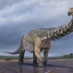 Gigantyczny dinozaur z Australii - był długi jak boisko do koszykówki