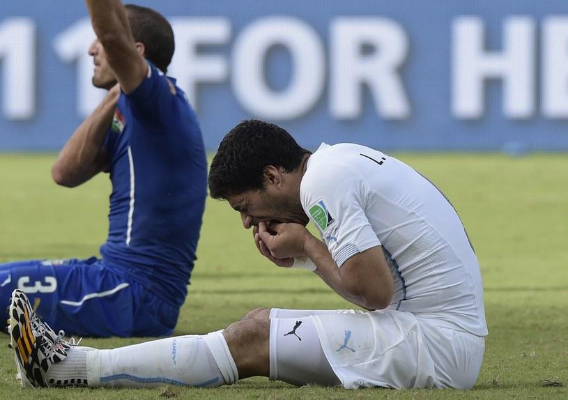 Giorgio Chiellini (w tle) i Luis Suarez /AFP