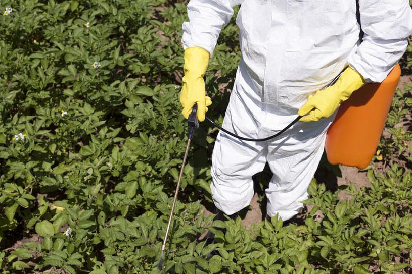 Glifosat stosuje się często do spryskiwania upraw roślin modyfikowanych genetycznie /123RF/PICSEL