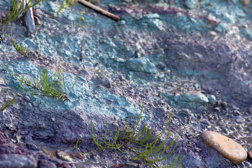Glinka kambryjska /©123RF/PICSEL