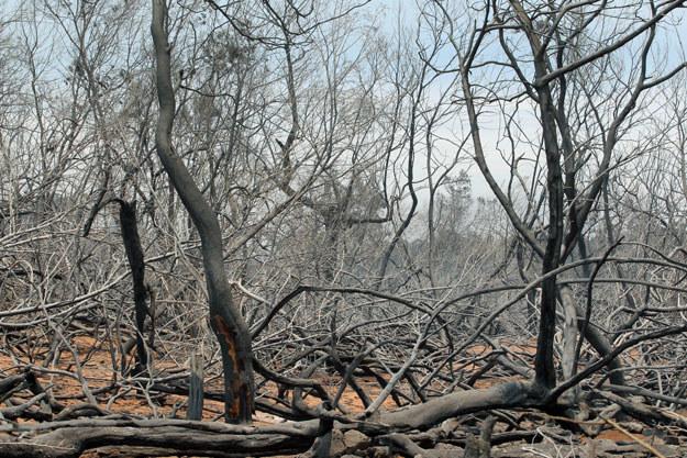 Globalne ocieplenie to prosta droga do nieprzewidywalnych zmian w środowisku fot. Richard Bouhet /AFP
