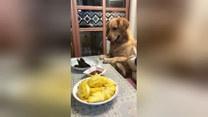 Głodny pupil. Co zrobił, by dostać obiad?