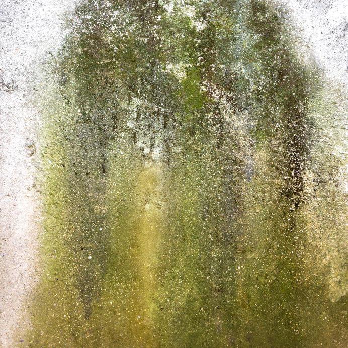 Glony na ścianie /©123RF/PICSEL