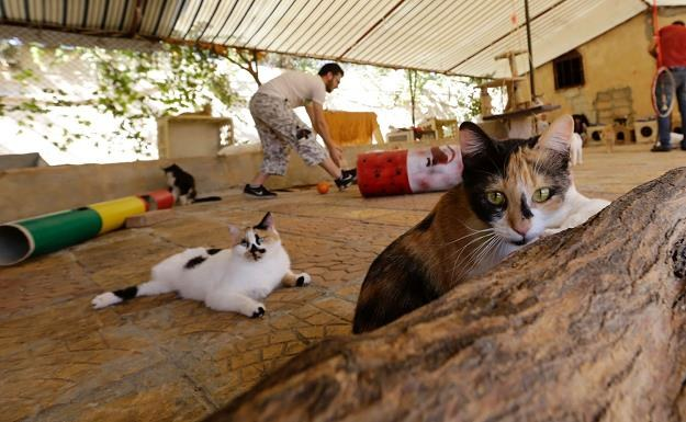 Gminy bedą finansować sterylizację zwierząt /AFP