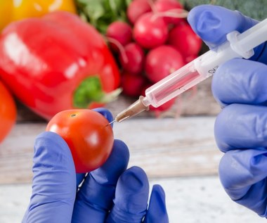 GMO: Czy rzeczywiście jest szkodliwa?