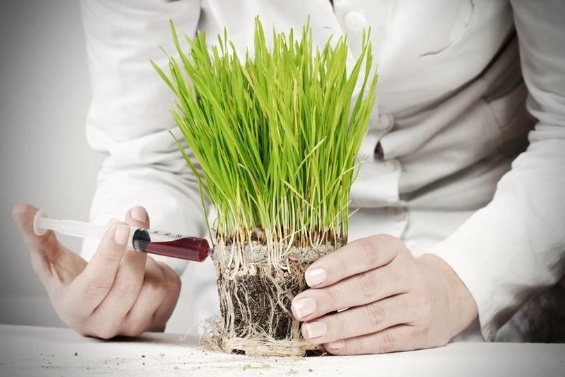 GMO; zdj. ilustracyjne /East News