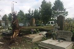 """Gniezno po burzy: Uszkodzony dach katedry, połamane drzewa. """"To była katastrofa"""""""