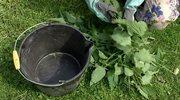 Gnojówka z pokrzyw to idealny nawóz