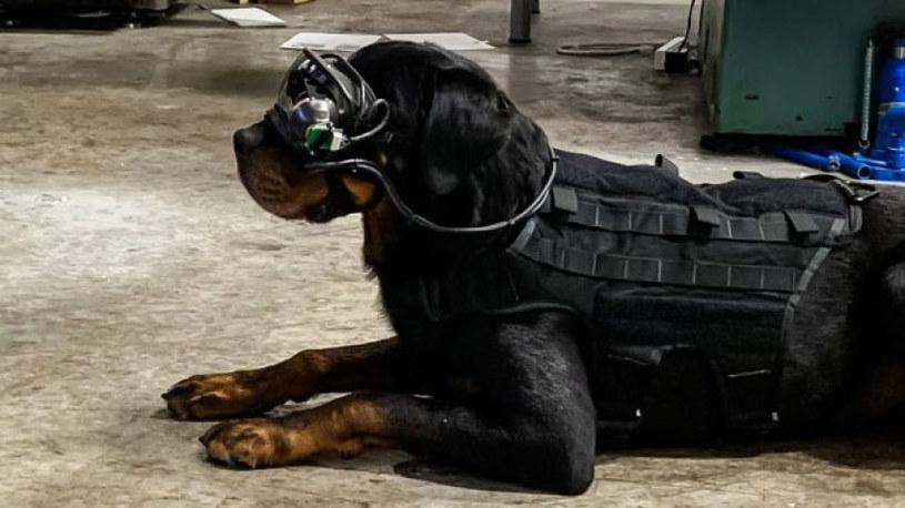 Gogle AR dla psów / fot. CCDC Army Research Laboratory /materiał zewnętrzny