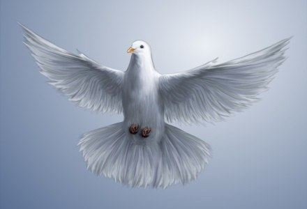 Gołąb pocztowy okazał się szybszy od łączy internetowych fot. Sheila VooDoo /stock.xchng