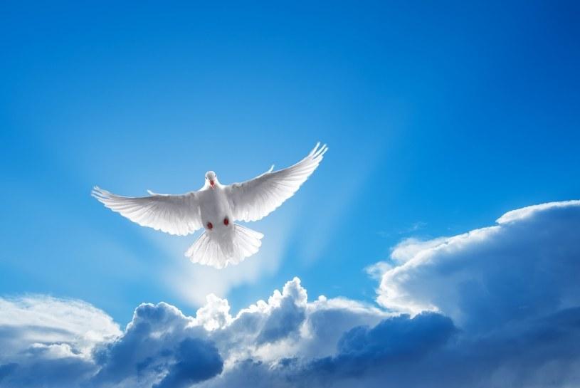 Gołąb - symbol Ducha Świętego /©123RF/PICSEL