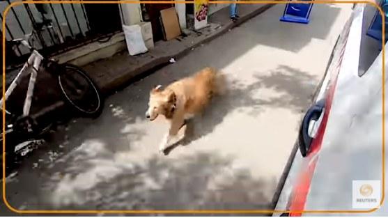 Golden Retriever nie chciał zostawić przyjaciółki nawet na chwilę! /YouTube