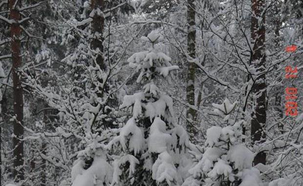 Gorąca Linia: Mróz maluje dziś zimowe krajobrazy