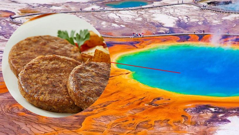 Gorące źródła Yellowstone kryją drobnoustroje przydatne do produkcji bezmięsnego jedzenia /materiały prasowe