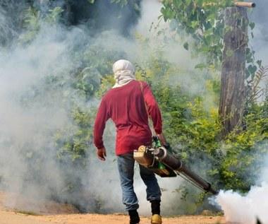 Gorączka denga i żółta febra powracają. Do 2080 r. zakażonych będzie aż 2 mld osób?