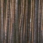 """""""GPC"""": PiS sięgnie po pieniądze Lasów Państwowych"""