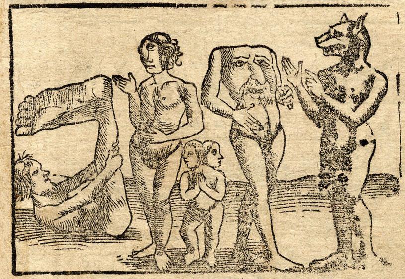 Grafika przedstawiająca różne deformacje różnego ciała. Wśród nich znalazł się cynocefal /domena publiczna