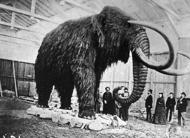 Greccy bogowie to w istocie... mamuty i nosorożce /Getty Images/Flash Press Media