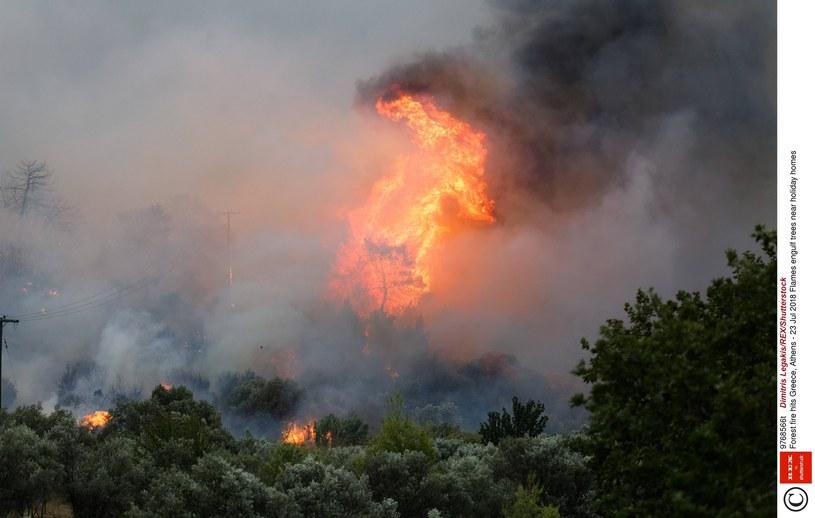 Grecja płonie /Dimitris Legakis/REX/Shutterstock /East News