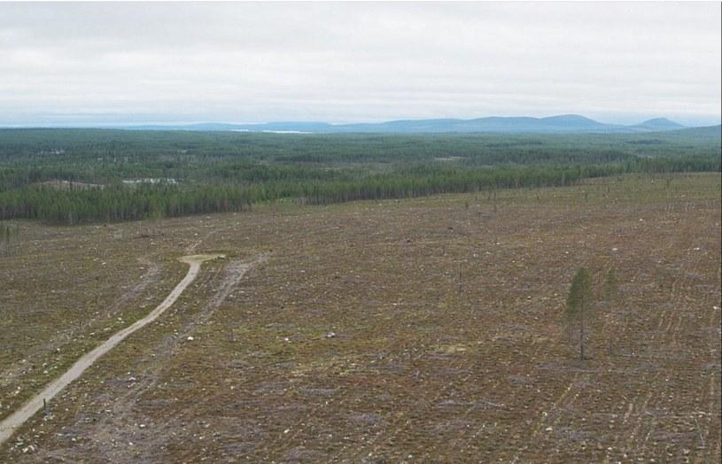 Greta Thunberg opublikowała zdjęcie lasu wyciętego w jej kraju (twitter.com/GretaThunberg) /