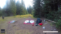Grizzly na biwaku. Niedźwiedzie tuż przy namiotach turystów w Kanadzie