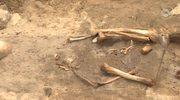 Groby wampiryczne na budowie drogi