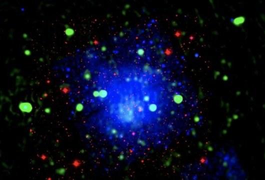 Gromada galaktyk Abell 655 /materiały prasowe