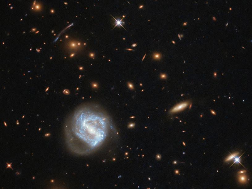 Gromada galaktyk SDSS J0333 + 0651 /NASA