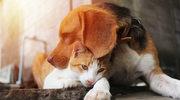 Groźne choroby, którymi możemy zarazić się od psów i kotów
