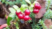 Groźne pasożyty czają się w pysznych owocach