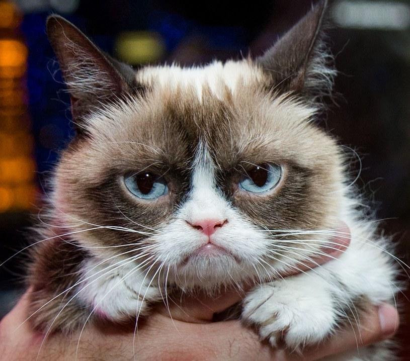 Grumpy Cat /MediaPunch/REX/ /East News