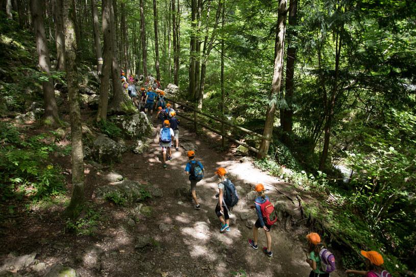 Grupa dzieci na wycieczce w lesie, zdjęcie ilustracyjne /123RF/PICSEL
