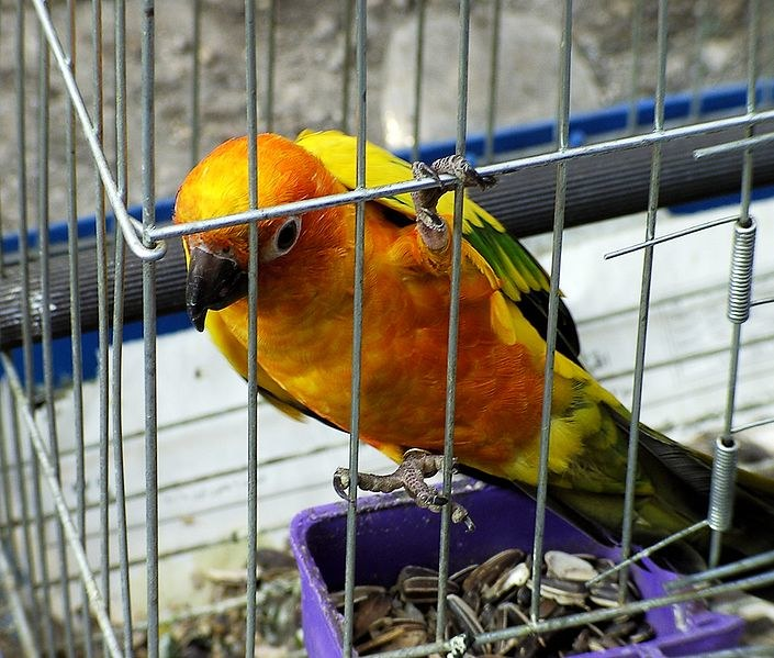 Gruźlica ptasia /© Photogenica