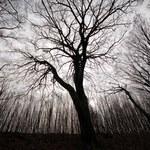Gry terenowe. Czy kleszczowski las stanie się rezerwatem?