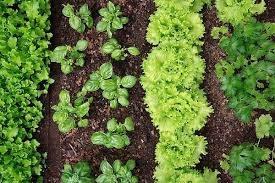 grządki warzywne /© Photogenica