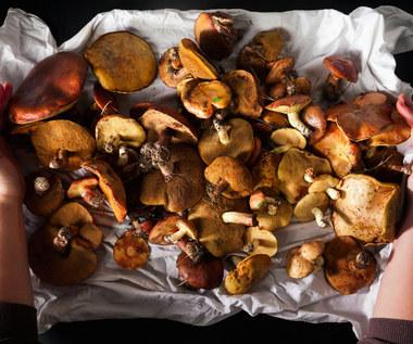 Grzybobranie: Jak odróżnić grzyby jadalne od trujących?