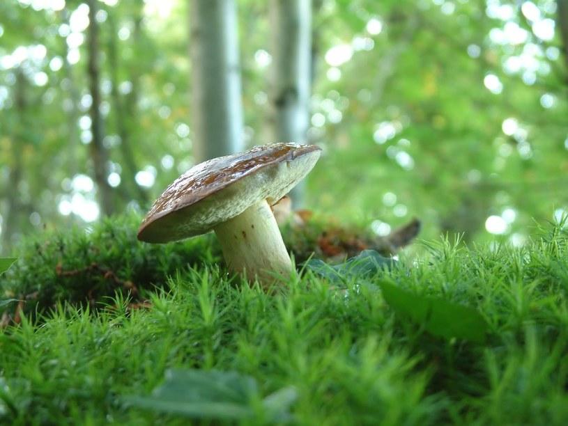 grzyby demencja /© Photogenica