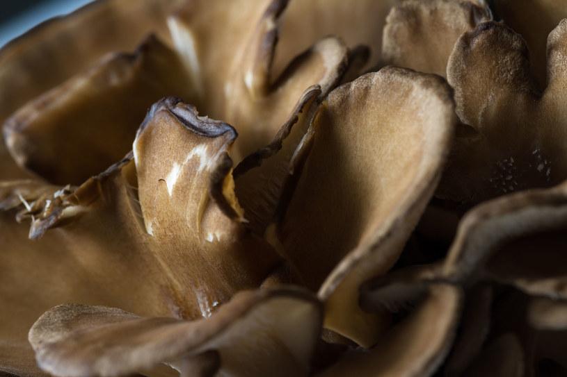 Grzyby maitake przyczyniają się do obniżenia poziomu cukru we krwi /123RF/PICSEL