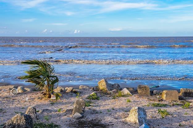 Gujana, wybrzeże atlantyckie /©123RF/PICSEL