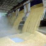 GUS podał wskaźniki zmian cen podstawowych produktów rolnych