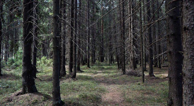 Gutek schronienia szukał m.in. w lesie /123RF/PICSEL