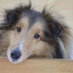 Hałaśliwy pies w bloku może uprzykrzyć życie mieszkańcom