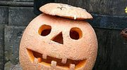 Halloween oswaja lęki
