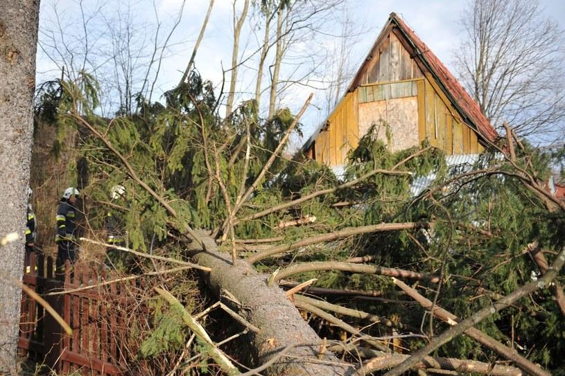 Halny wyrządził w Zakopanem poważne szkody /Adrian Gladecki /Reporter