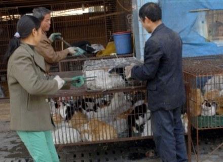 Handlarze wyciągają z klatki wybranego przez klienta kota, Nanhai, Chiny /East News