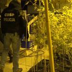 Handlowali narkotykami na gigantyczną skalę. Gang krakowskich pseudokibiców rozbity