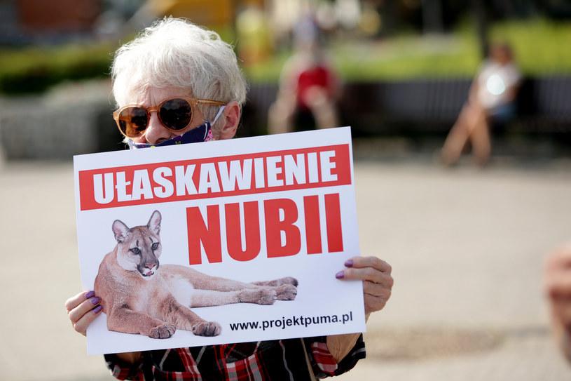 """Happening """"Ułaskawienie Nubii"""" /Jarek Praszkiewicz /Agencja FORUM"""