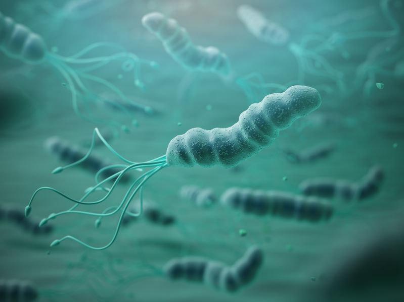 Helicobacter pylori /©123RF/PICSEL
