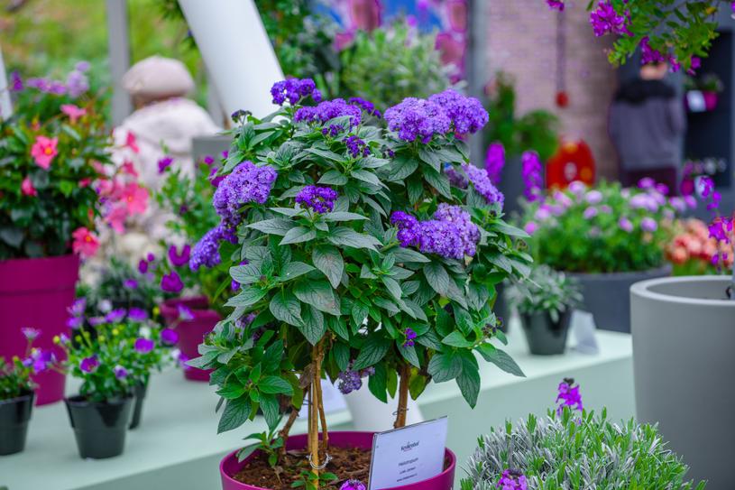Rośliny Na Balkon Cienisty I Słoneczny Kobieta W Interiapl